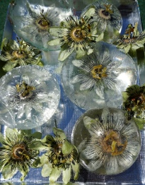 Dried Passion Flowers